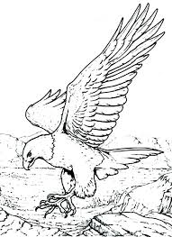 Coloring Pages Of Eagles Eagle Coloring Page Coloring Pages Of
