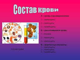 Функции и состав крови Кроветворение Состав крови