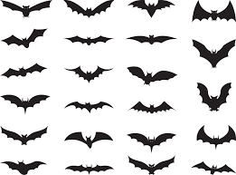 Types Of Bats Chart Bats Wiki Everything You Wanted To Know About Bats Ever