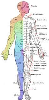 Lumbar Nerve Pain Chart Wiring Diagrams