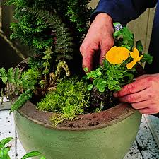 Small Picture Cool Container Gardens Sunset