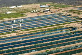 Algae Farm Design Growing Algae More Sustainably For Biofuel Production