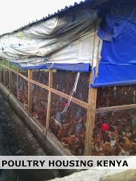 Poultry Farm Design 1000 Layer Poultry Farm In Kenya Poultry Farm Poultry