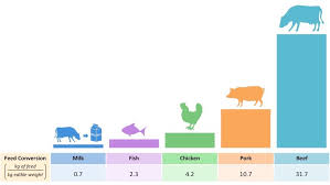 Cattle Feed Conversion Charts Feed Conversion Ratio Bioninja