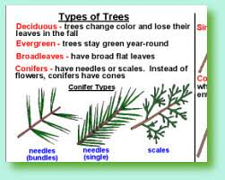 Tree Identification Chart Oakview Resources Tree Identification At A Glance