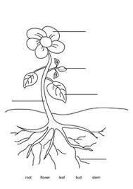 Small Picture Label the Parts of a Plant Outdoor Worksheets Printables