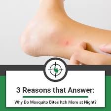 3 Reasons that Answer: Why Do Mosquito Bites Itch More at Night?