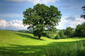 Image result for planting shade trees