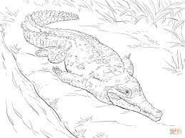 Small Picture Orinoco Crocodile Download Coloring Pages Animal New Canvases