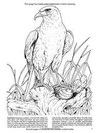 Small Picture Eagle Coloring Pages Animal Coloring Pages Pinterest Eagle