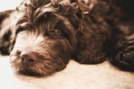best hardwood floor vacuum for pet hair