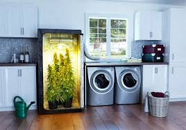 how to grow indoors