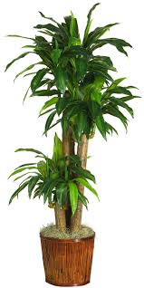 Dracena w/Basket Silk Plant (Real Touch)