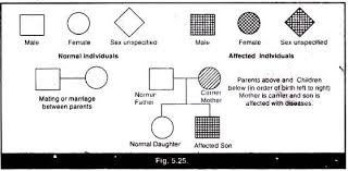 Pedigree Chart Explanation Pedigree Analysis Of Hemophilia Explained With Diagram