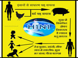 swine flu in hindi hn symptoms prevention स्वाइन  swine flu