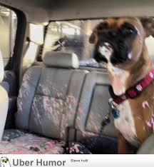 Car Wash Quotes My dog opened the window during a car wash Funny Pictures Quotes 64