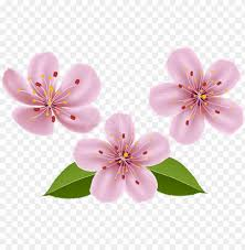 free png spring flowers png