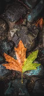272173 Leaf, Maple Leaf, Tree, Green ...