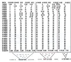 Boxer Puppy Weight Chart 49 Unmistakable Kitten Growth Chart Weight