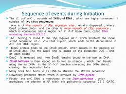 prokaryotic dna replication dna ligase catalyzes the formation of phosphodiester bond 15 termination iuml130151 replication