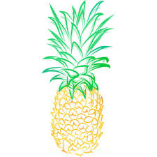 pineapple drawing tumblr. pin drawn pineapple tumblr photography #2 drawing