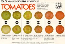 Tomato Color Chart What Color Is Your Tomato How To Ripen Them A Way To Garden