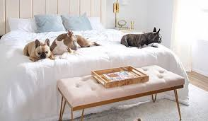 animal friendly furniture. Family Proof Animal Friendly Furniture