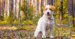 lyme disease in dogs 10 facts every