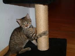 Feline Forever Cat scratch