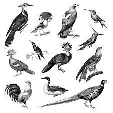 鳥のビンテージイラスト ベクター画像 無料ダウンロード