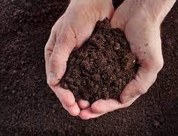 garden soil over potting soil
