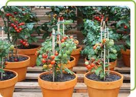 terrace and home garden set up service