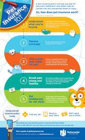 pet insurance 101 infographic