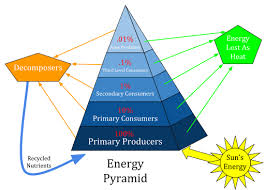 Components Of Ecosystem Flow Chart Ecological Pyramid Definition Types And Examples