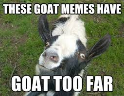 Goat Quotes Impressive The 48 Best Funny Goat Pictures Of All Time
