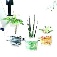 plants in glass bowl glass bowl plants growing in bowls flower with inside plants in large