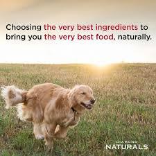 Diamond Naturals Large Breed Puppy Formula Dry Dog Food 40 Lb Bag
