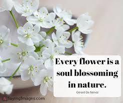 Quotes About Flowers Blooming Impressive 48 Beautiful Flower Quotes SayingImages