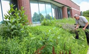 Office gardening Vegetable Garden Jim Kleinwachter Program Manager With The Conservation Foundation In Naperville Says He Appreciates The Fact Daily Herald Post Office Gardeners Reach Prairie Planting Compromise