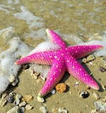 pink things pink thing of the day pink starfish the pink things pink thing of the day pink starfish the worleygig