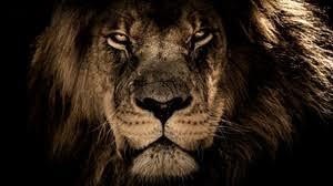 roaring lion wallpaper hd 1080p. Delighful Wallpaper Preview Wallpaper Lion Muzzle Mane Predator Look Inside Roaring Lion Wallpaper Hd 1080p L