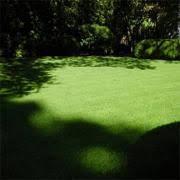 Poa Supina Grass Seed Blend - Shade Grass Seed