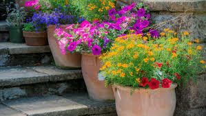top 30 potted plants independent ie