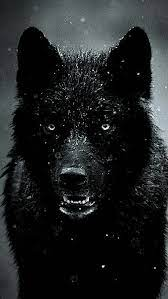 Black Wolf, HD mobile wallpaper