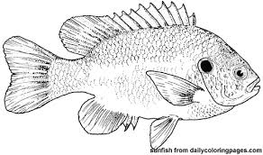 Fish Pictures To Color For Kids Fish Coloring Pages Images