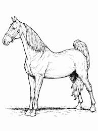 Coloring Book Horse Pages