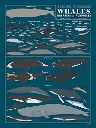 Whale Scale Chart A Pop Chart Lab Art Print Cataloging Nearly 90 Majestic