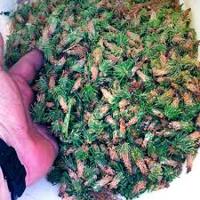 Bagworms Insecticide Under Fontanacountryinn Com