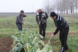 Αποτέλεσμα εικόνας για απθ αγροκτημα