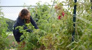 grow your own vegetables to benefit